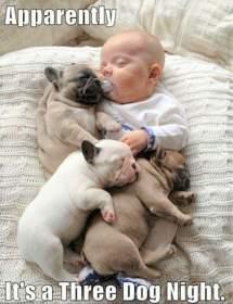 Name:  Three Dog Night.jpg Views: 269 Size:  11.9 KB