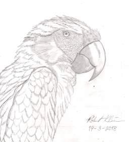 Name:  Parrot1.jpg Views: 136 Size:  8.4 KB