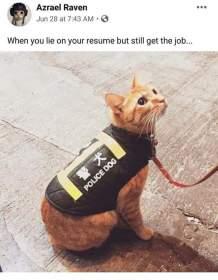Name:  Police Dog.jpg Views: 174 Size:  10.5 KB